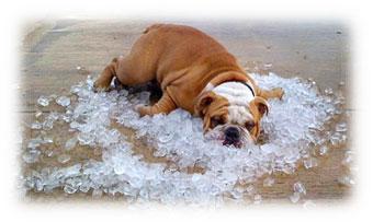 Prevent Pet Heat Exhaustion